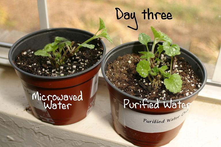 microwave oven radiated water and plant experiments